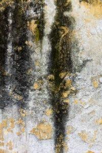 Black Mold Growth